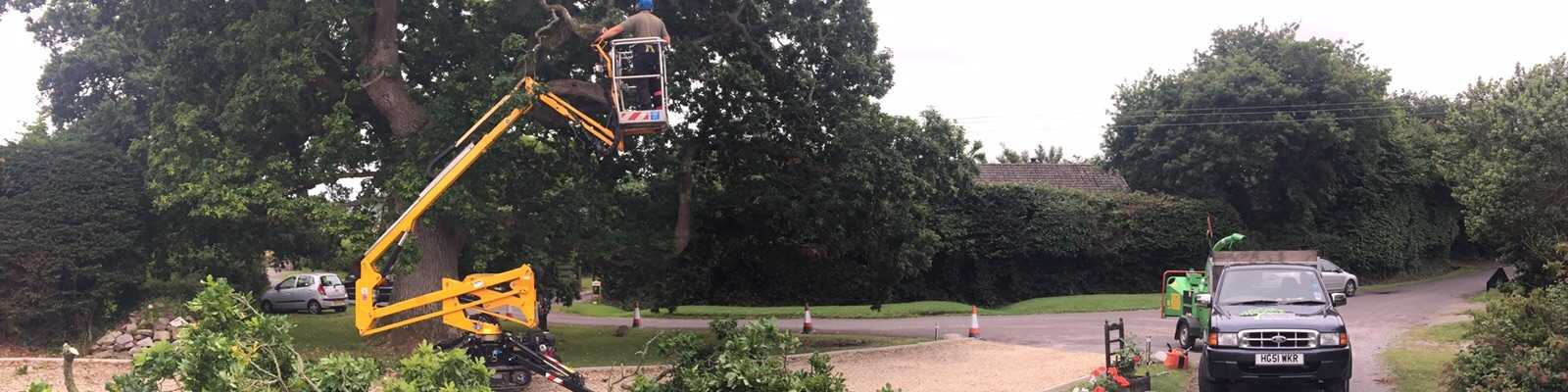 Crane lifting arborist into tree to perform technical dismantles