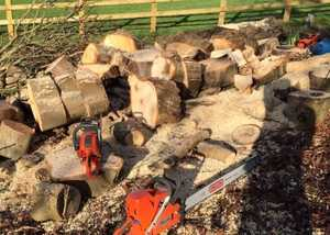 Trees being cut into logs for sale