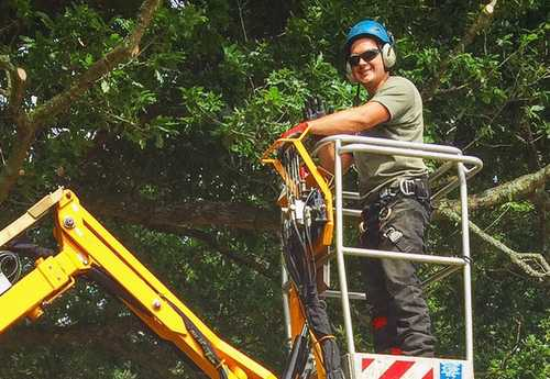 Robin Parker Tree Services performing tree inspections on a crane